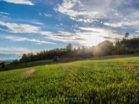 Sonnenstrahlen über dem Auensteiner Wald belichtet die Wiese in vollem Grün